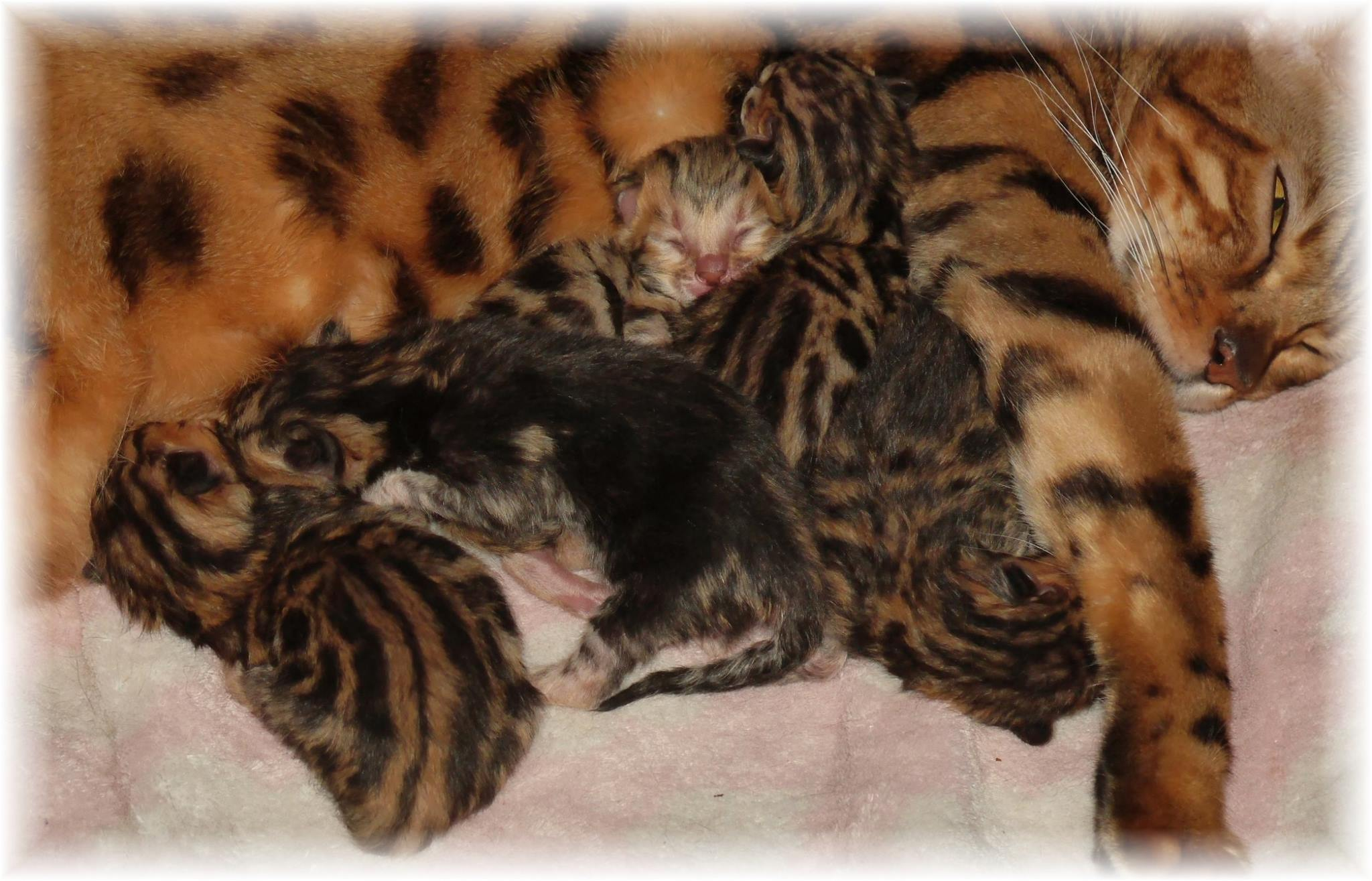 Kittens Born on New Years Day