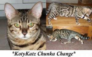 KotyKatz Chunka Change