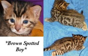 Brown Boy 3 weeks