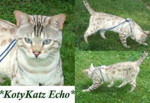 KotyKatz Echo