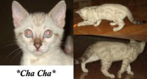 ChaCha9wks