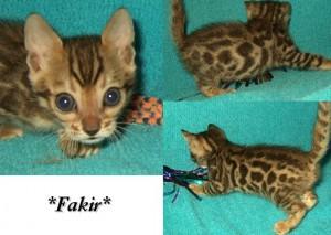 Fakir6wks