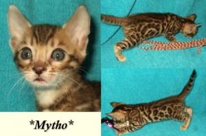 Mytho6wks