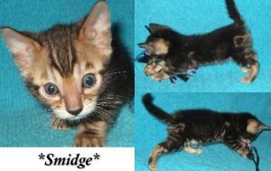 Smidge6wks