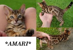 Amari8wks