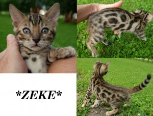 Zeke8wks