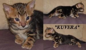 Kuvera4wks