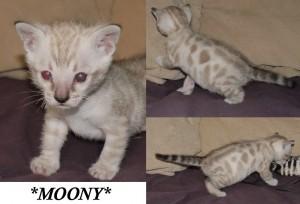 Moony4wks