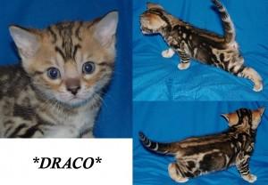 Draco4wks