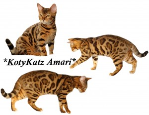 KotyKatz Amari
