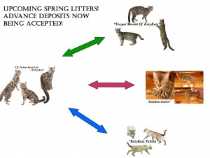 Spring litters 2015