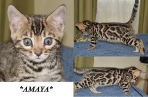 Amaya7wks