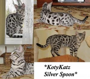 KotyKatz Silver Spoon