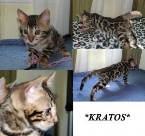 Kratos8wks