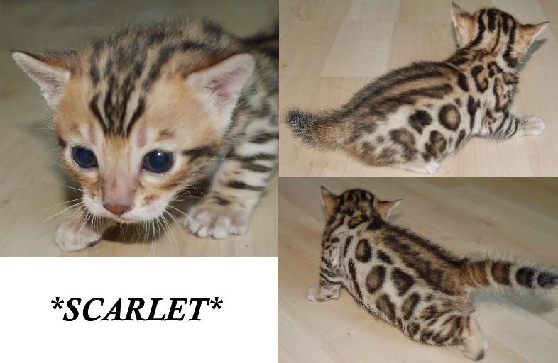 Scarlet3wks