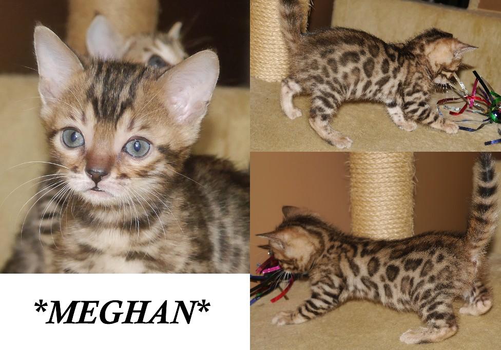 Meghan 6 weeks