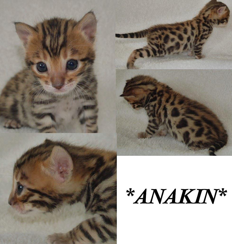 Anakin 3 weeks