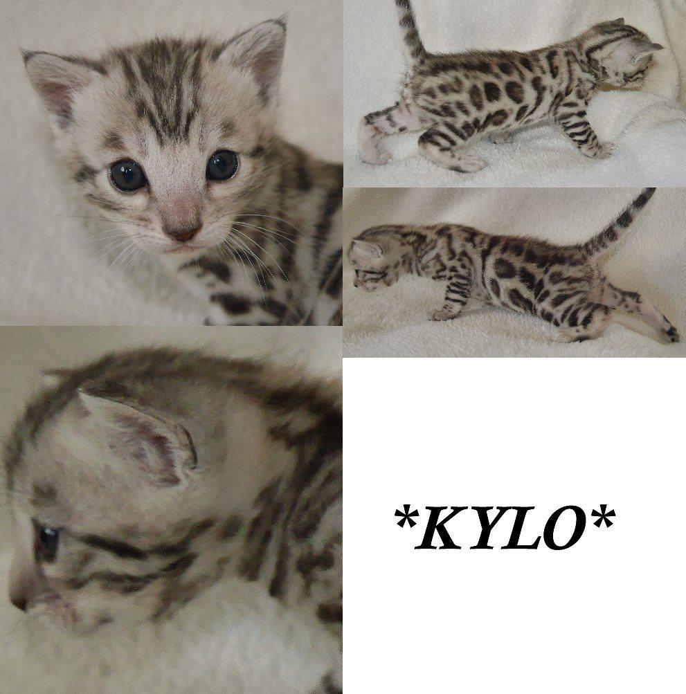 Kylo 3 weeks