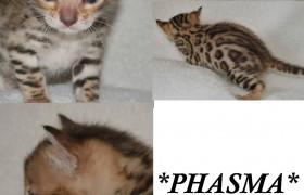 Phasma 3 weeks