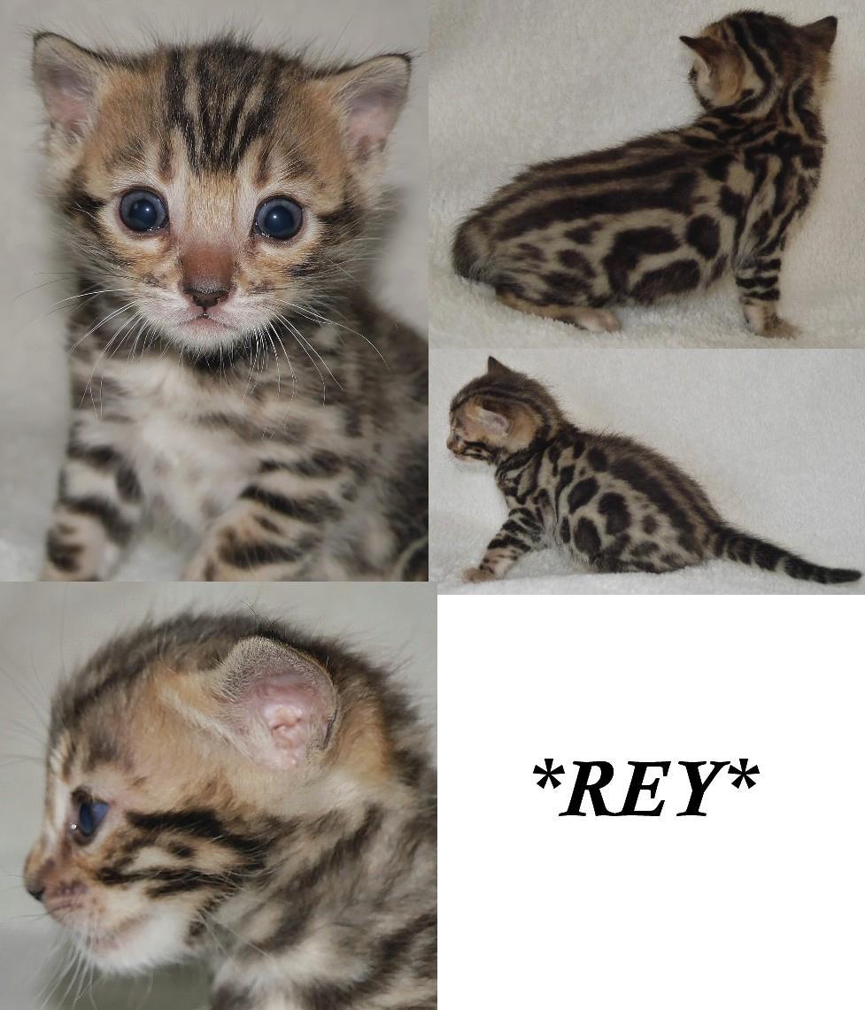 Rey 3 weeks