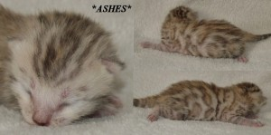 Ashes - David Bowie Tribute Litter