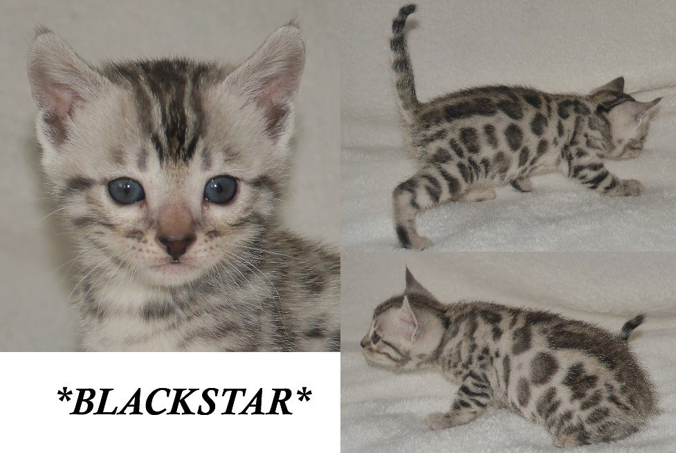 Blackstar 6 Weeks