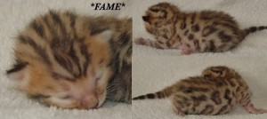 Fame - David Bowie Tribute Litter