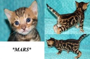 Mars 4 weeks