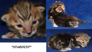 Ziggie Stardust - David Bowie Tribute Litter