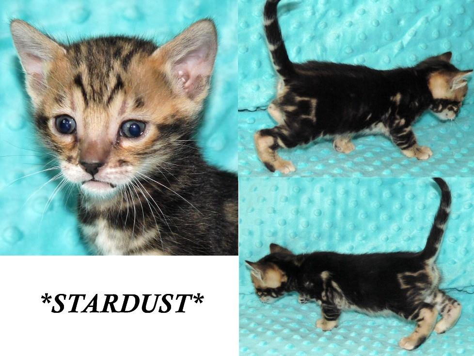 Stardust 4 weeks