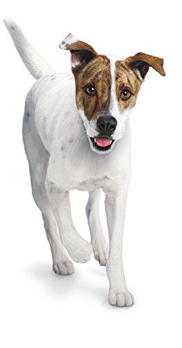 Youtube Dog Bacon Cat