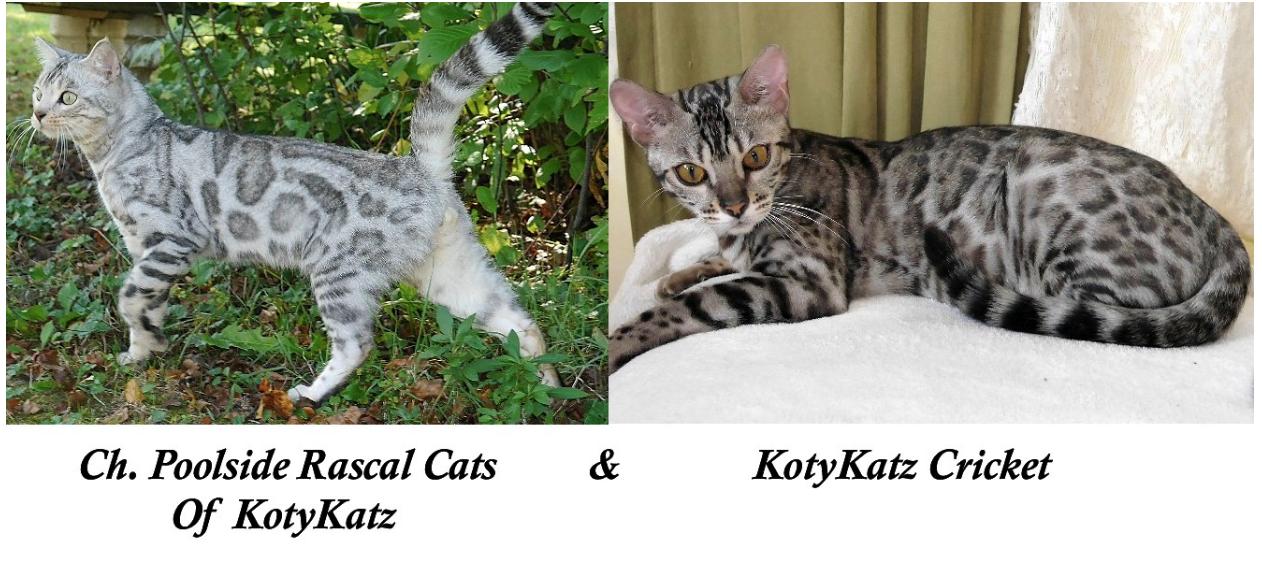 Champion Poolside Rascal Cats and KotyKatz Cricket