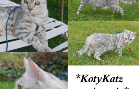 KotyKatz Argyria 2 Years