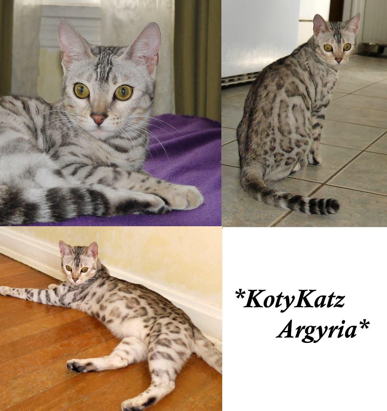 KotyKatz Argyria