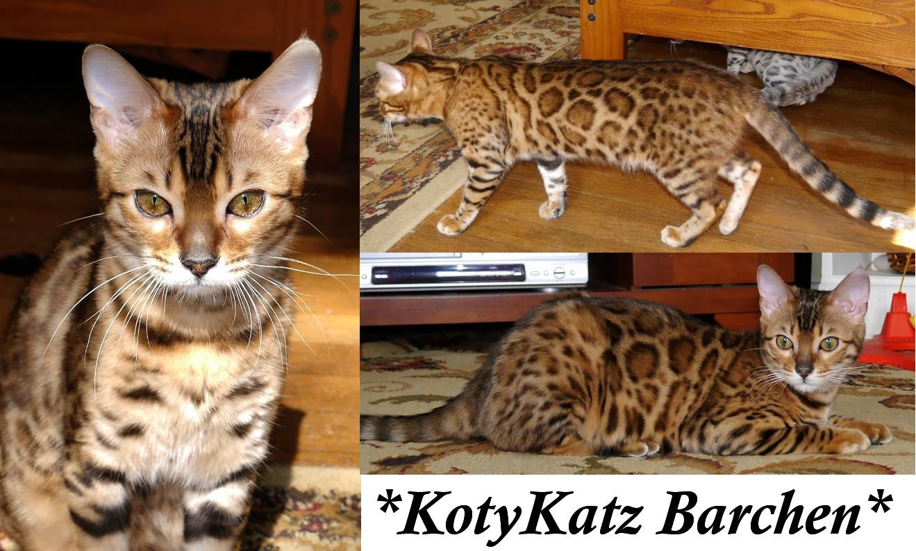 KotyKatz Barchen