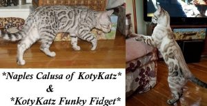 Naples Calusa of KotyKatz and KotyKatz Funky Fidget