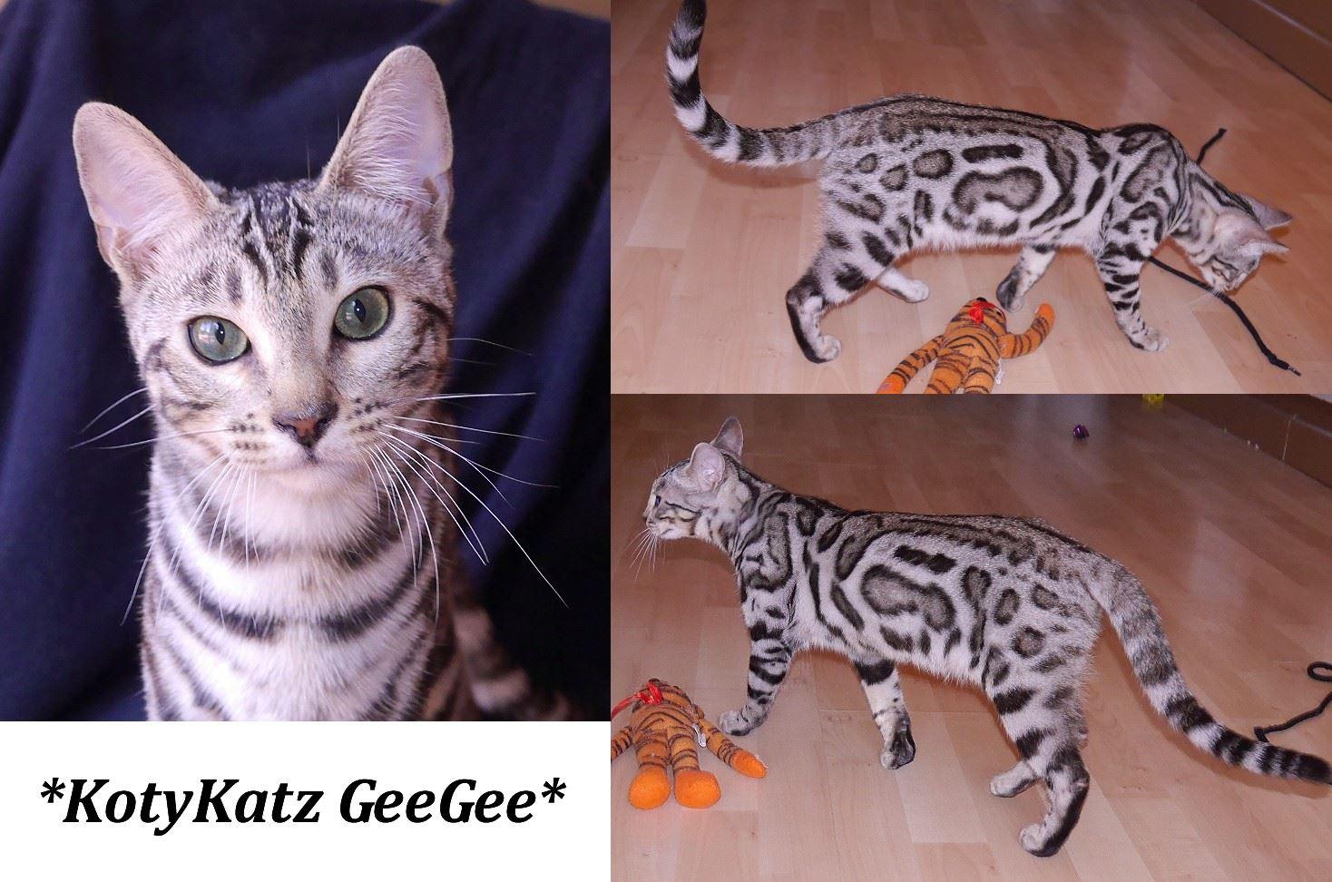 KotyKatz GeeGee