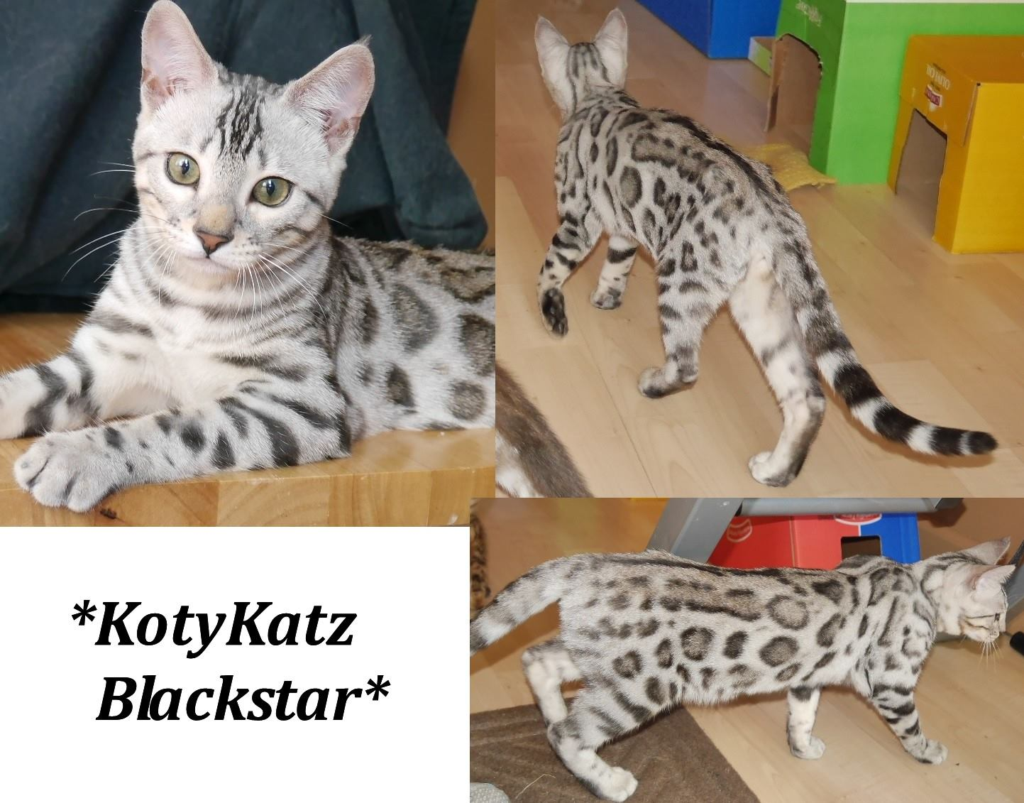 KotyKatz Blackstar