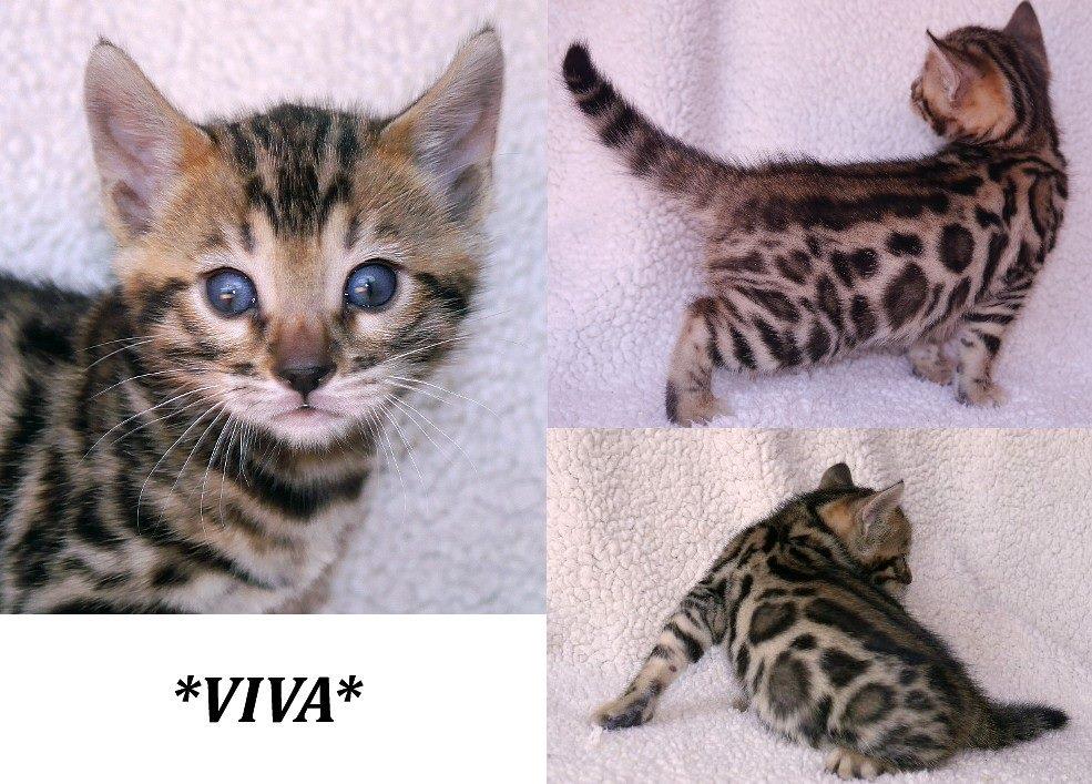 Viva 4 Weeks