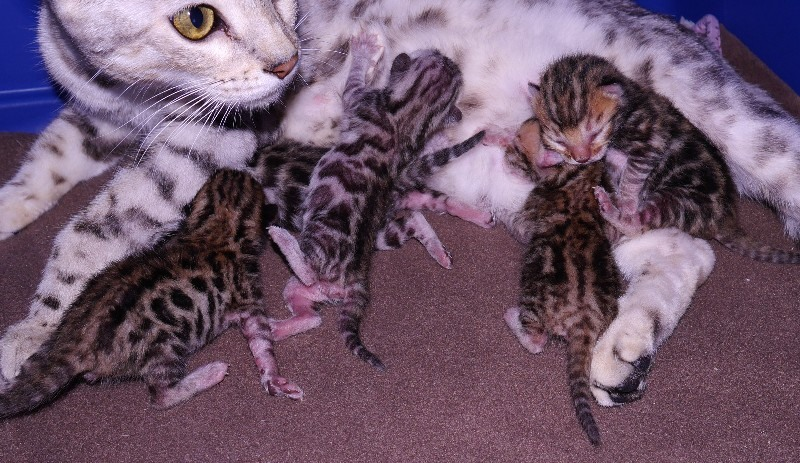 How Many Kittens Can A Cat Have The First Time