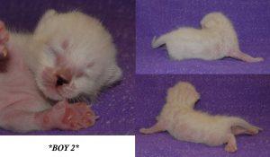 Boy 2 1 Week