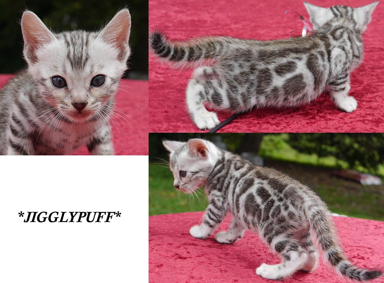 Jigglypuff 5 Weeks