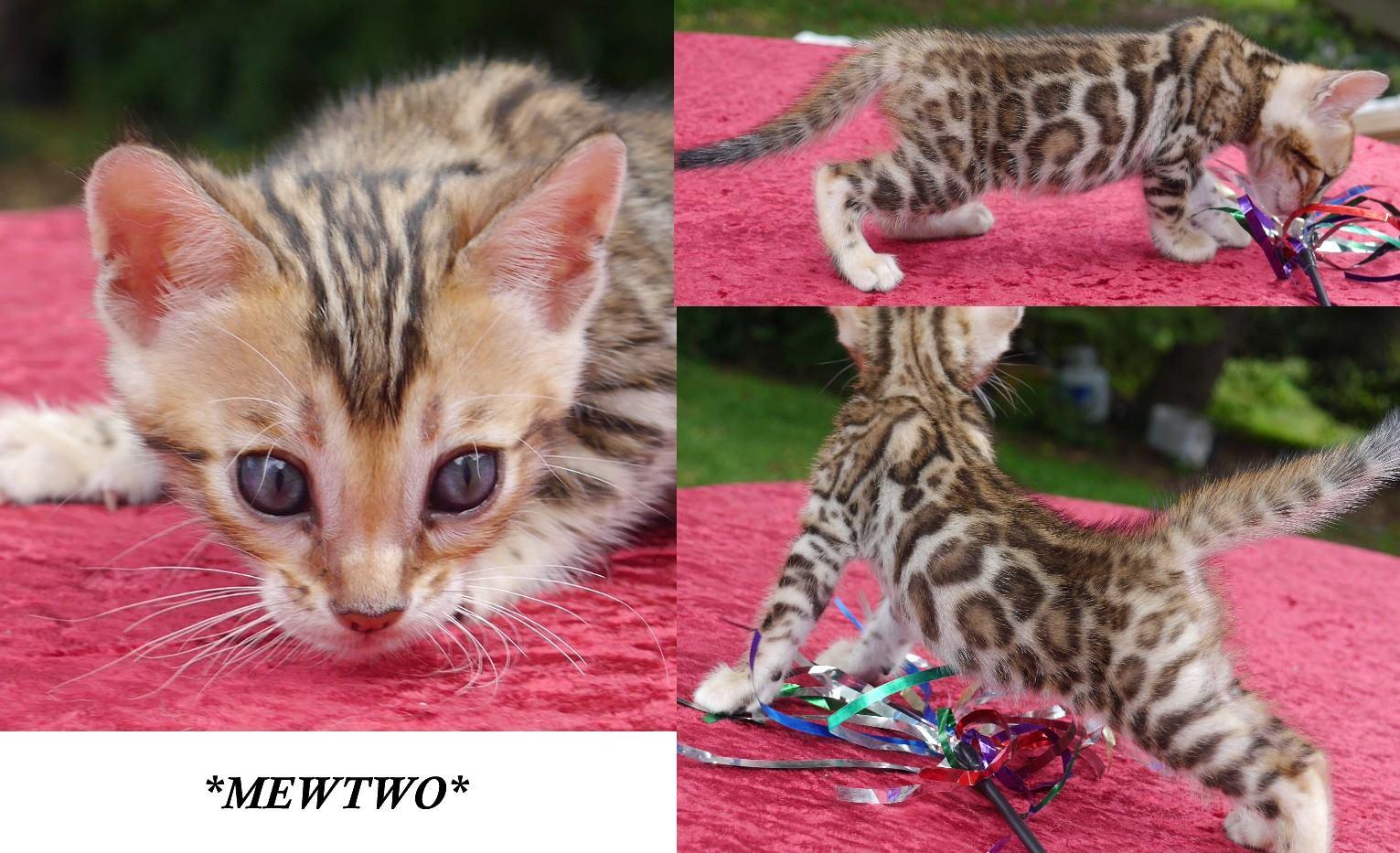 Mewtwo 5 weeks