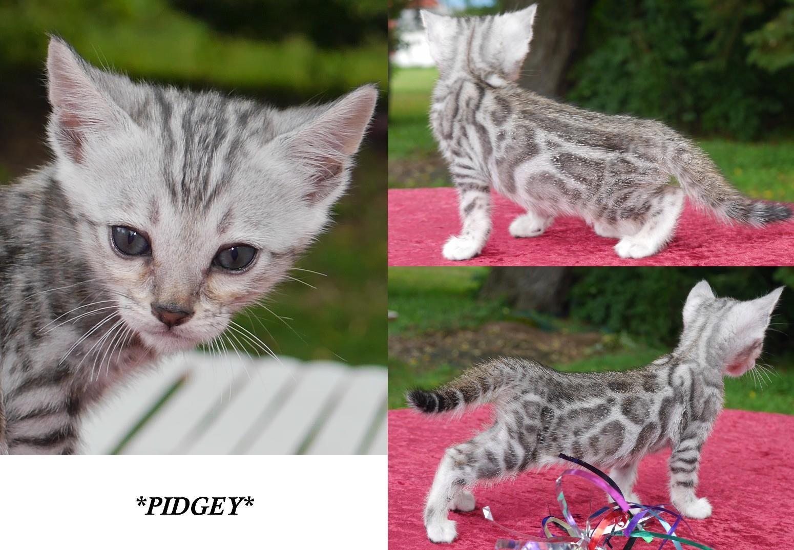 Pidgey 5 Weeks