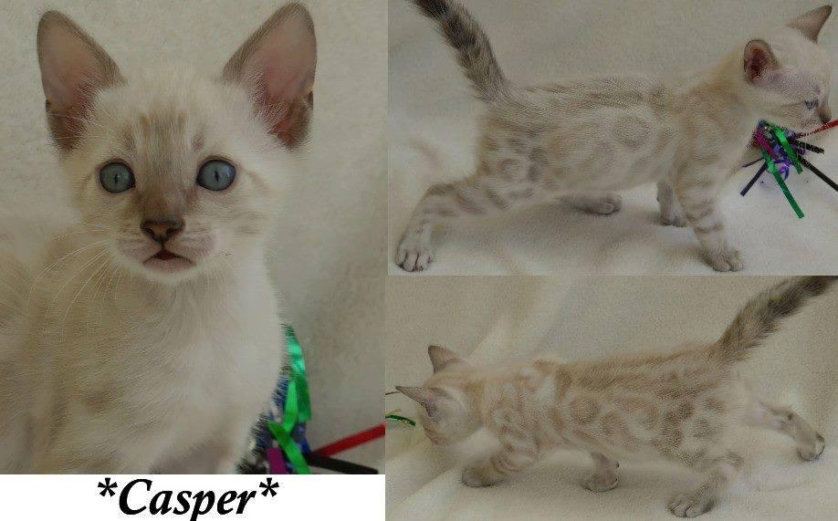 Casper 6 Weeks