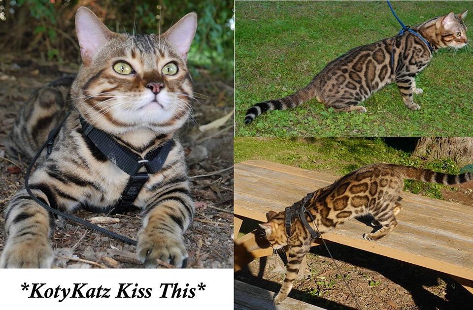 KotyKatz Kiss This