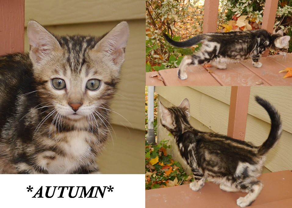 Autumn 8 Weeks
