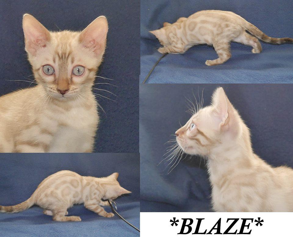 blaze-10-weeks
