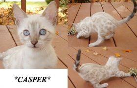 Casper 8 Weeks