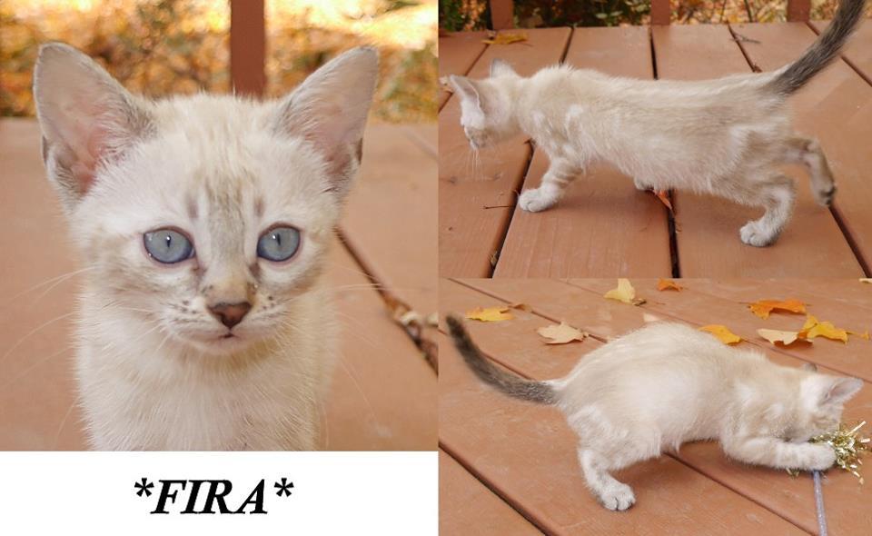 fira-8-weeks